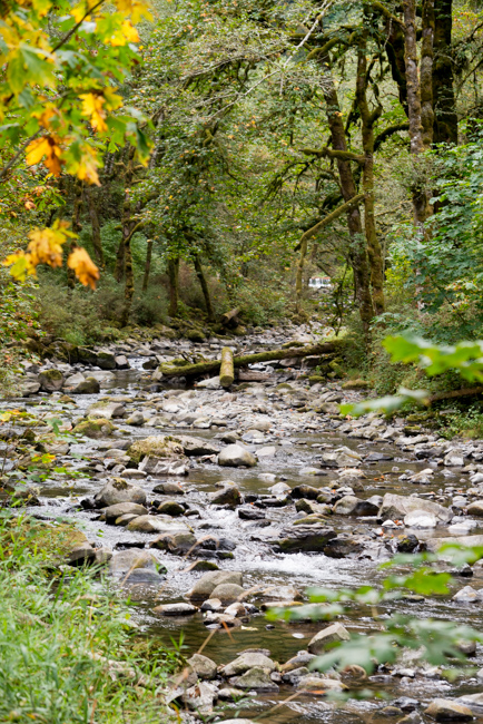 Wahclella-Falls-Portland-Fall-2014-The-Horticult-ryanbenoitphoto-thehorticult-RMB_0484