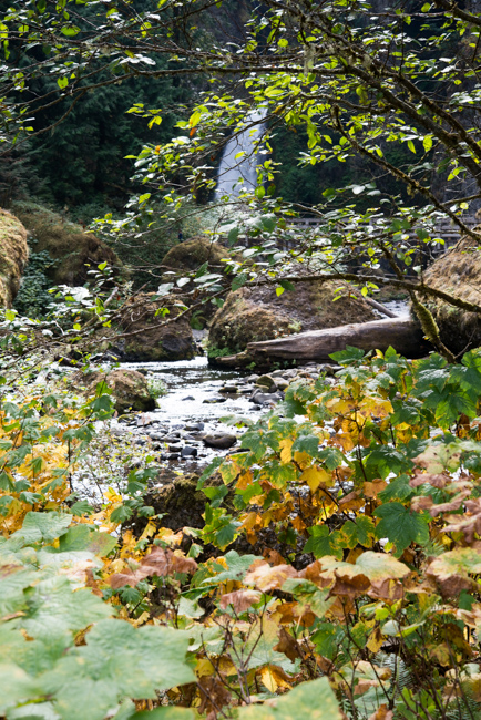 Wahclella-Falls-Portland-Fall-2014-The-Horticult-ryanbenoitphoto-thehorticult-RMB_0549