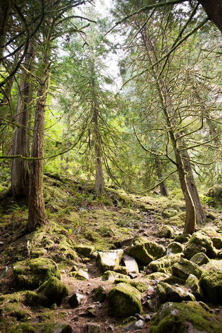 Wahclella-Falls-Portland-Fall-2014-The-Horticult-ryanbenoitphoto-thehorticult-RMB_0654