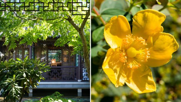 Lan Su Chinese Garden Tour