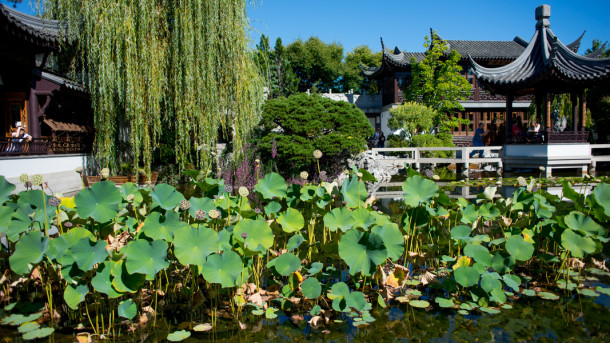 Lan Su Chinese Garden Tour - Portland, Oregon - The Horticult
