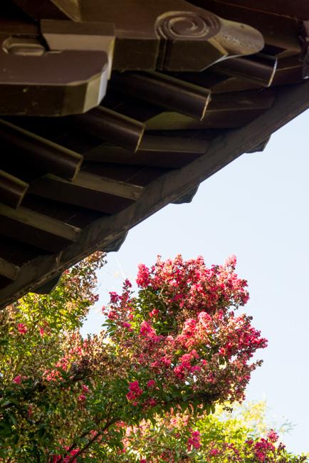 Lan Su Chinese Garden Tour - Portland, Oregon - The Horticult
