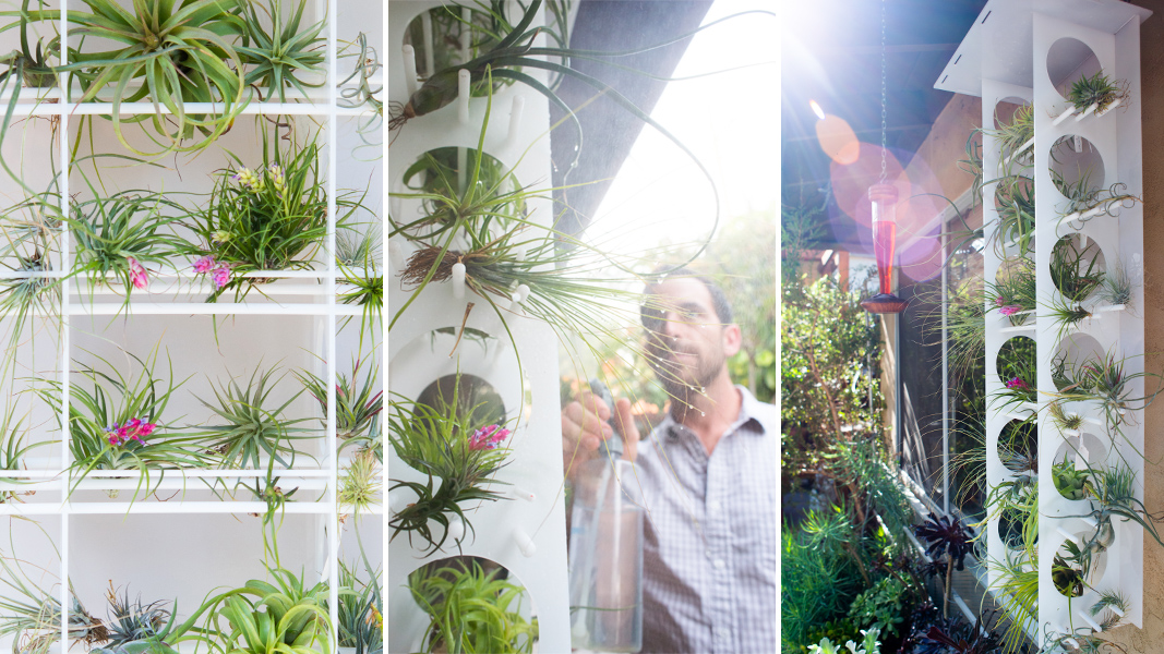 Tillandsia Towers: Introducing Our New Acrylic Habitat for Air Plants