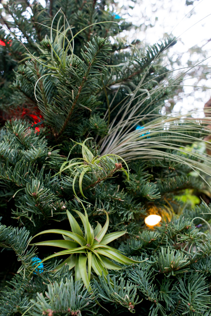 Decorating Outdoor Trees For Christmas