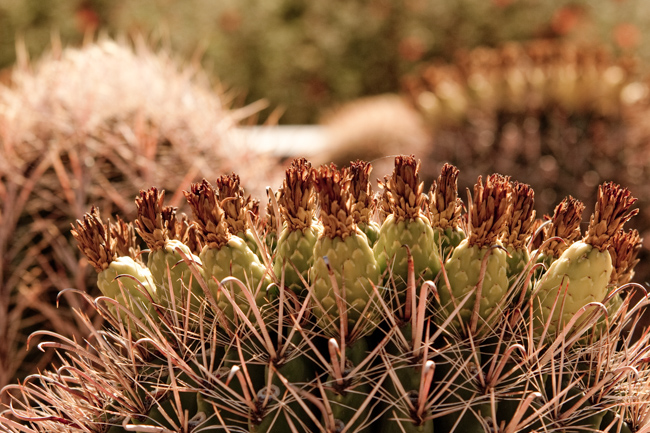 Desert Botanical Garden featured on The Horticult