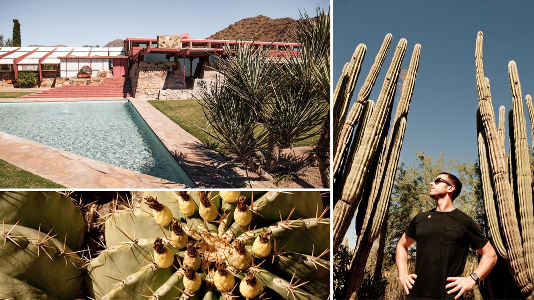 Desert Botanical Garden and Taliesin West