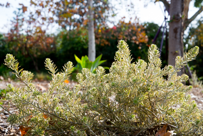 Terra Trellis and Terra Sculpture - Garden Tour