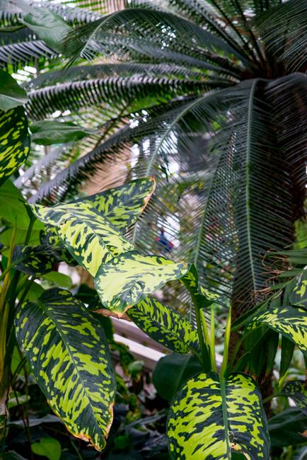 US Botanic Garden - Jungle