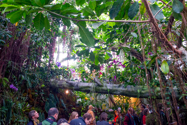 US Botanic Garden   Orchid Garden