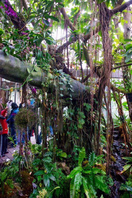 US Botanic Garden - Orchid Garden