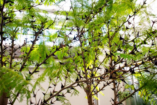 US Botanic Garden - Plant Adaptions