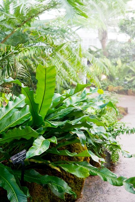 Garden Primeval