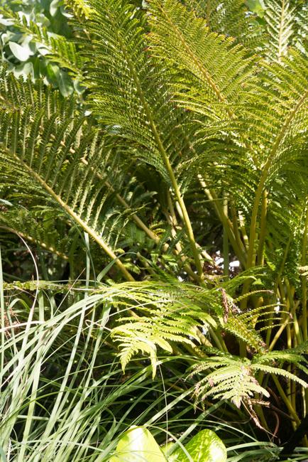 US Botanic Garden - Hawaii Garden