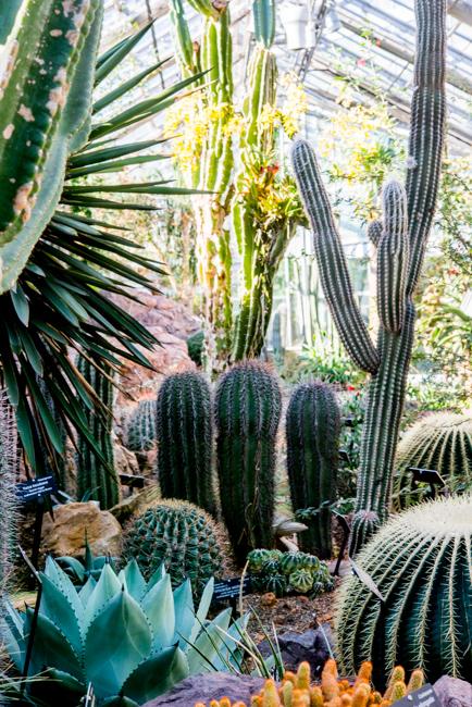 US Botanic Garden - World Deserts