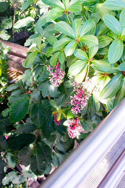US Botanic Garden - Canopy Walk