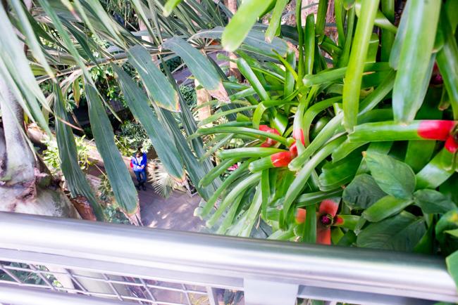 US Botanic Garden - Jungle - Canopy Walk
