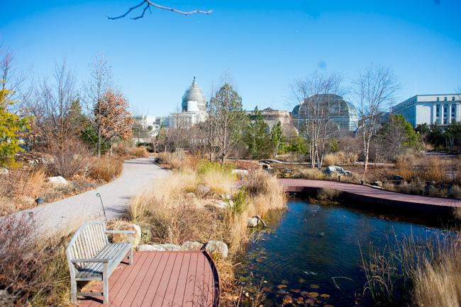 US Botanic Garden January 2015
