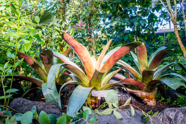 New York Botanical Garden Winter Conservatory Tour - The Horticult