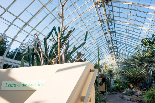 New York Botanical Garden Winter Conservatory Tour - The Horticult
