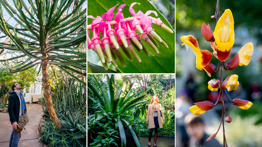 Bromeliads in the Bronx: A Visit to the New York Botanical Garden ...