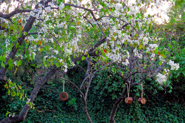 'Bee Bungalow' by Terra Trellis