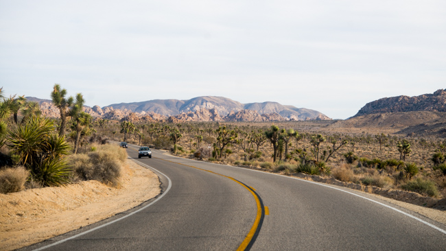 36 Hours in Joshua Tree National Park - The Horticult