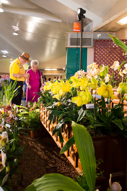 Santa Barbara Orchid Show - 2015 - Featured on The Horticult