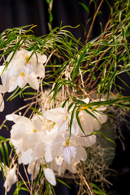 "Dendrobium papilio 'Rosminah' AM/AOS won ""Best in Show"" at the Santa Barbara Orchid Show - 2015 - Featured on The Horticult"