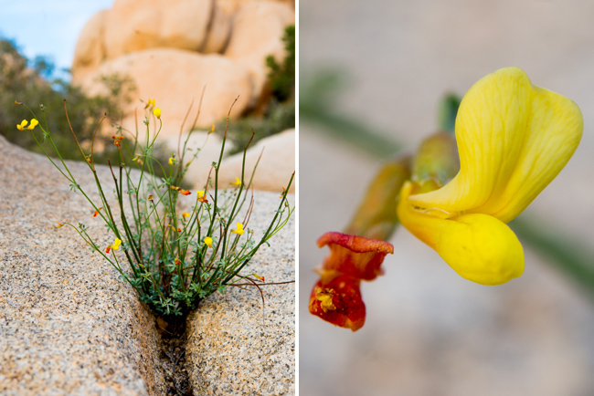Weekend in Joshua Tree National Park - The Horticult