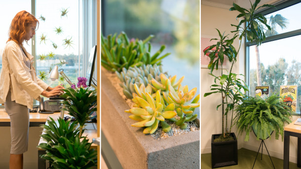 Office Plants - The Horticult