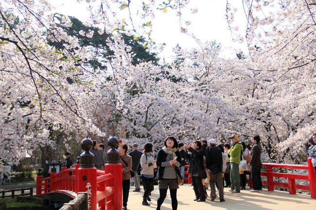 Flower Fests: Springtime Celebrations Around the World