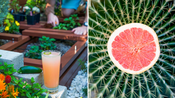 Spicey Paloma Recipe - The Horticult