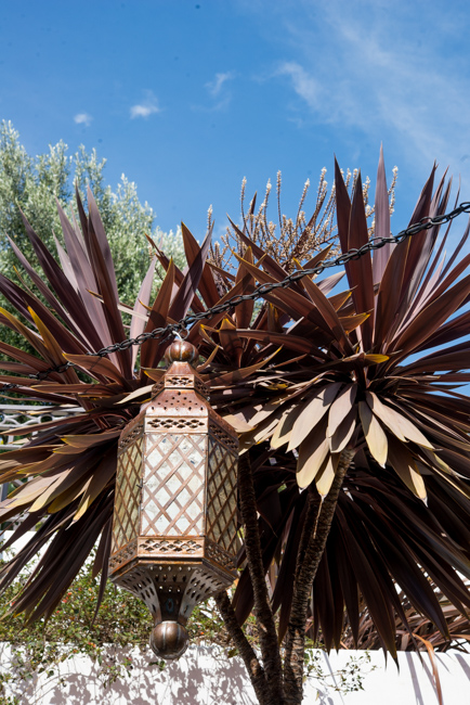 Moroccan lantern and cordyline plant
