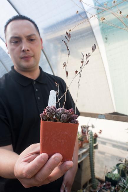 Terra Sol Garden Center - The Horticult