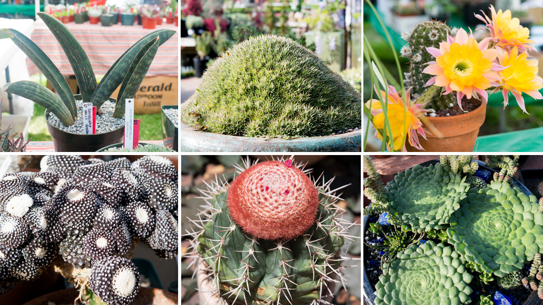 Where To Find Rare Succulents Near You