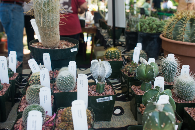 15th Annual Drought Tolerant Plant Festival - LACSS - The Horticult