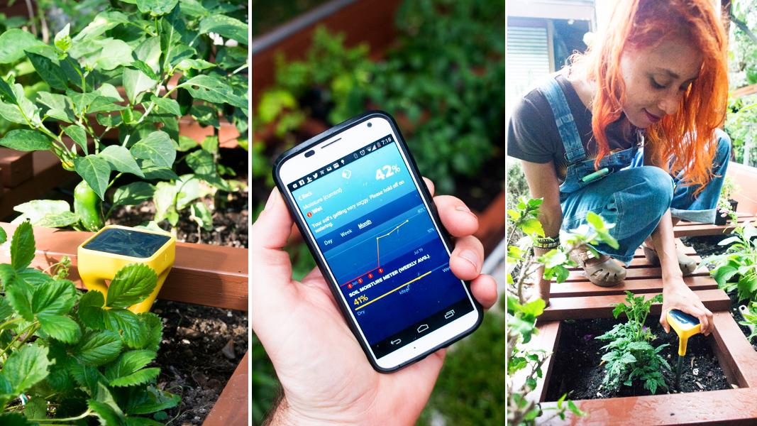 garden gadgets the solar powered edyn sensor is now monitoring our raised beds - Edyn Garden Sensor