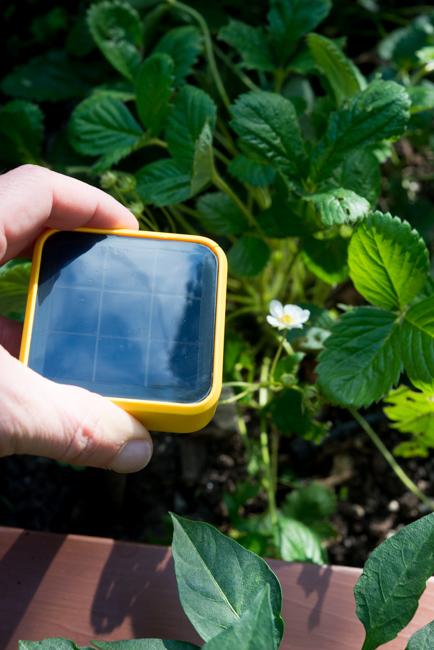 Edyn Garden Sensor - The Horticult