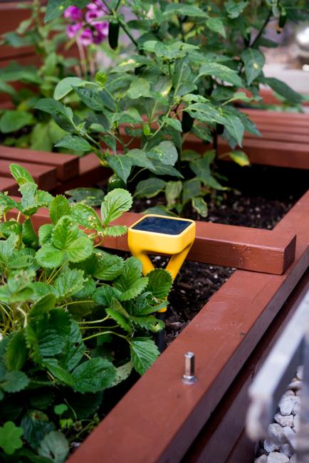 edyn garden sensor the horticult - Edyn Garden Sensor