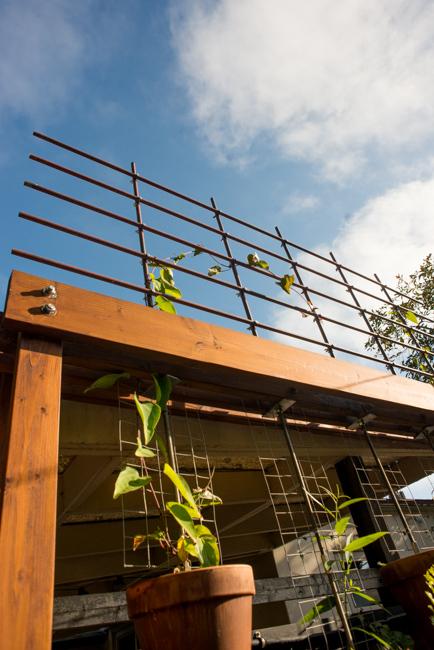 Copper pipe trellis DIY - The Horticult