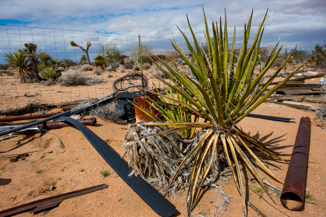 Noah Purifoy Outdoor Museum of Assemblage Sculpture in Joshua Tree