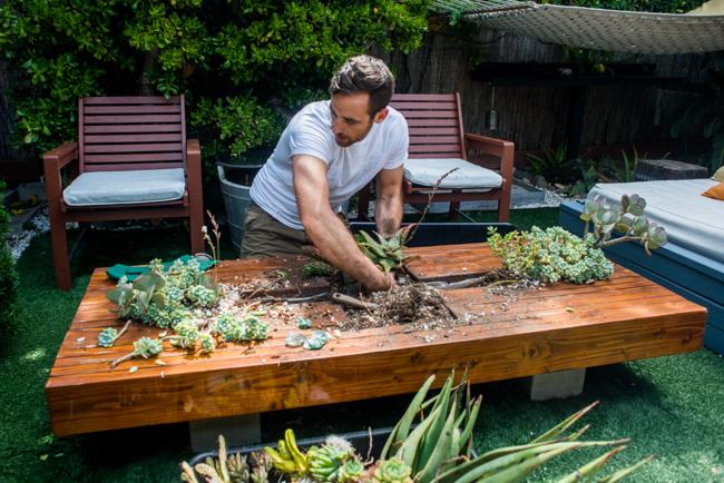 Summer Garden - The Horticult
