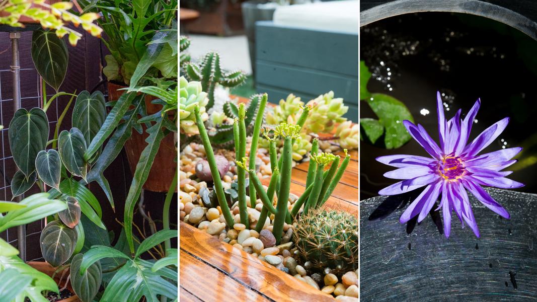 The Horticult Garden - Summer 2015