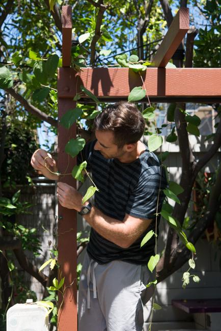 Summer Garden 2015 - The Horticult