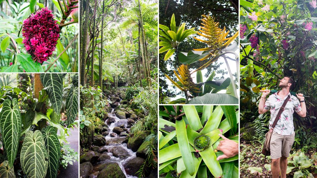 Superbe Hawaii Tropical Botanic Garden Tour