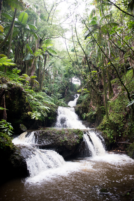 Hawaii Tropical Botanic Garden Tour