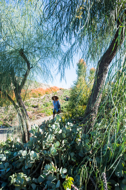 Waterwise Botanicals - Fall Garden Party