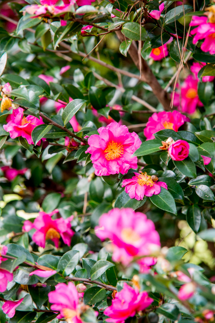 Airlie Gardens Visit