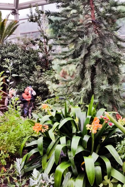 Brooklyn Botanic Garden