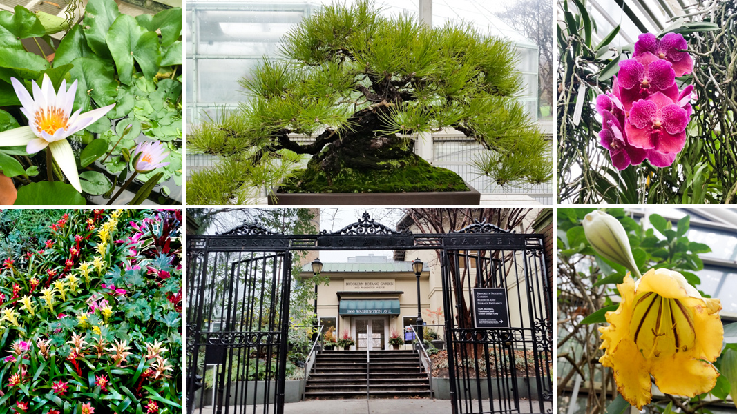 Escape From New York: A Sizzlin\' Winter Tour of Brooklyn Botanic ...